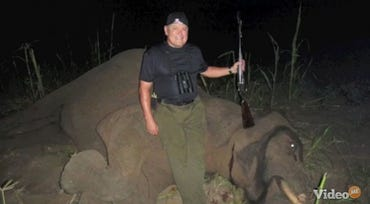 Hey Bob, killing protected, endangered animals is illegal