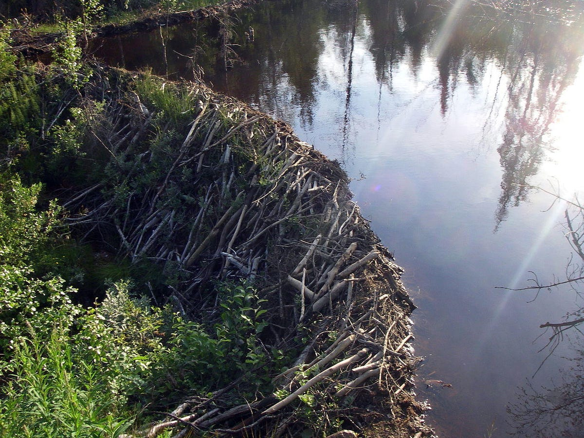 1280px-beaver-dam-jamtland.jpg