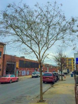 brooklyn-tree-1420.jpg