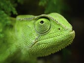 SUSE bridges the gap between openSUSE Leap and SUSE Linux Enterprise
