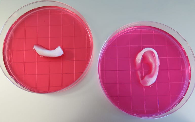 bioprinted-structures.jpg